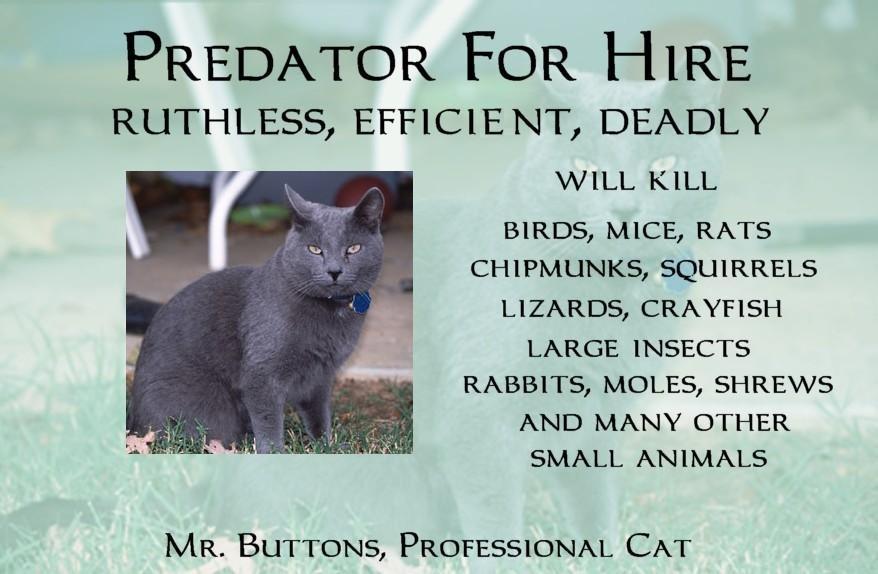 Predator for Hire