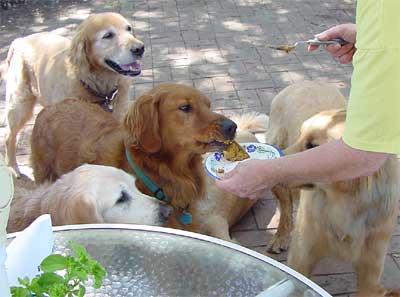 Dogs Like Cake