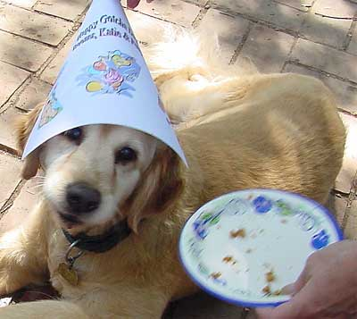 Dog Birthday 1