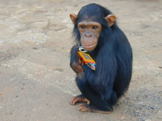 Chimp with Gameboy