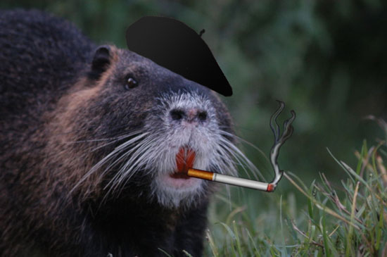 Nutria Terrorist